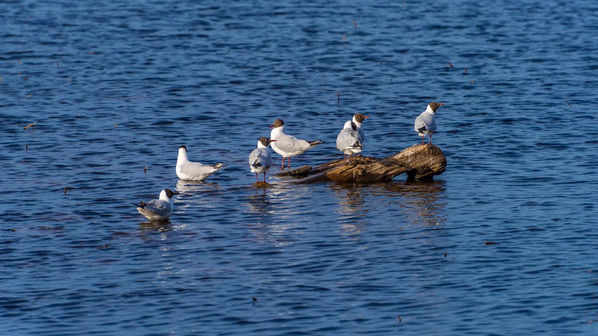 Посиделки на озере. - Владимир Лазарев