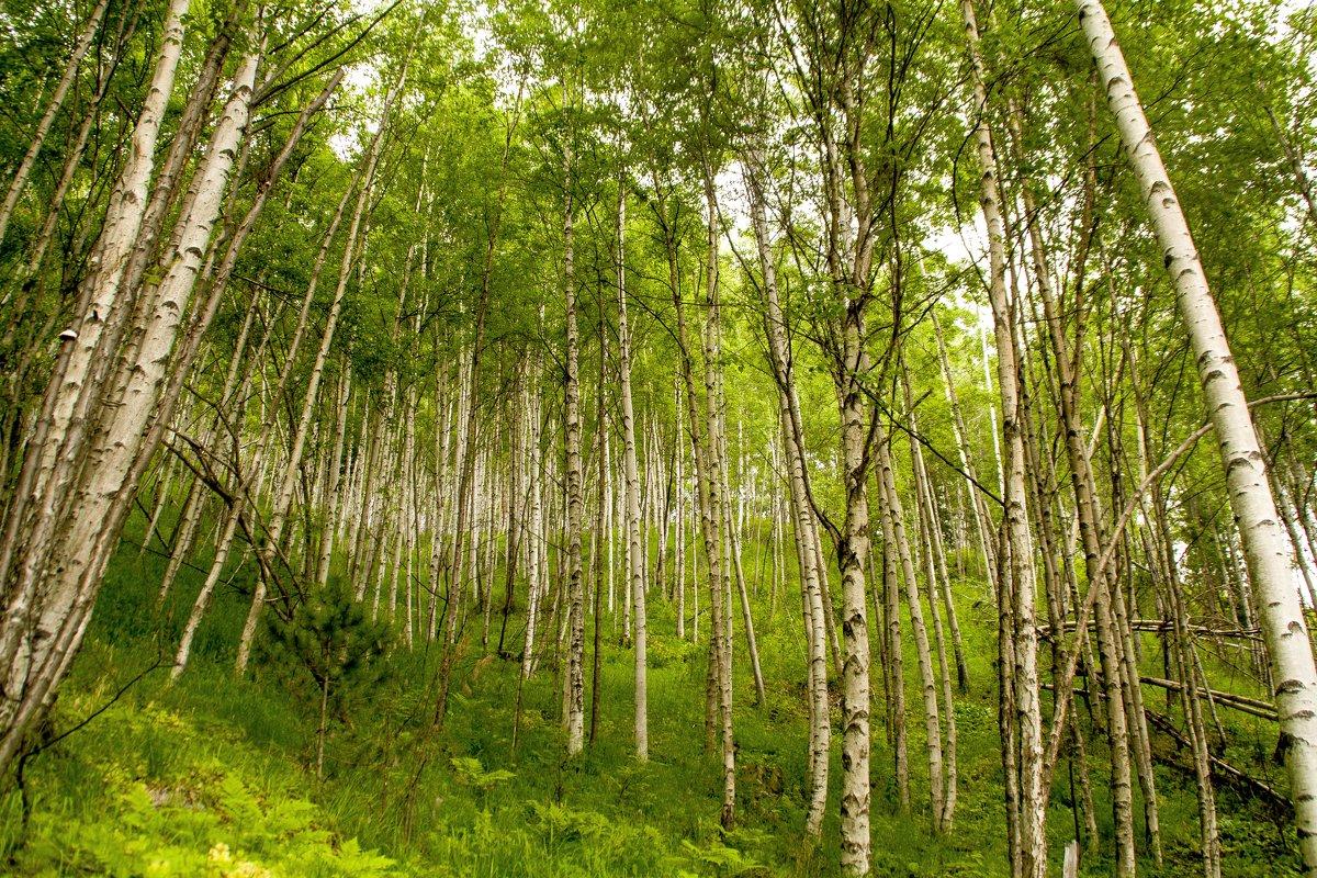 Лес окружает - Марина Кириллова