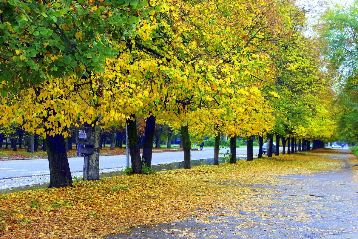 Что-то шепчут мне жёлтые кроны,обнимает тропинку листва... - Валентина ツ ღ✿ღ