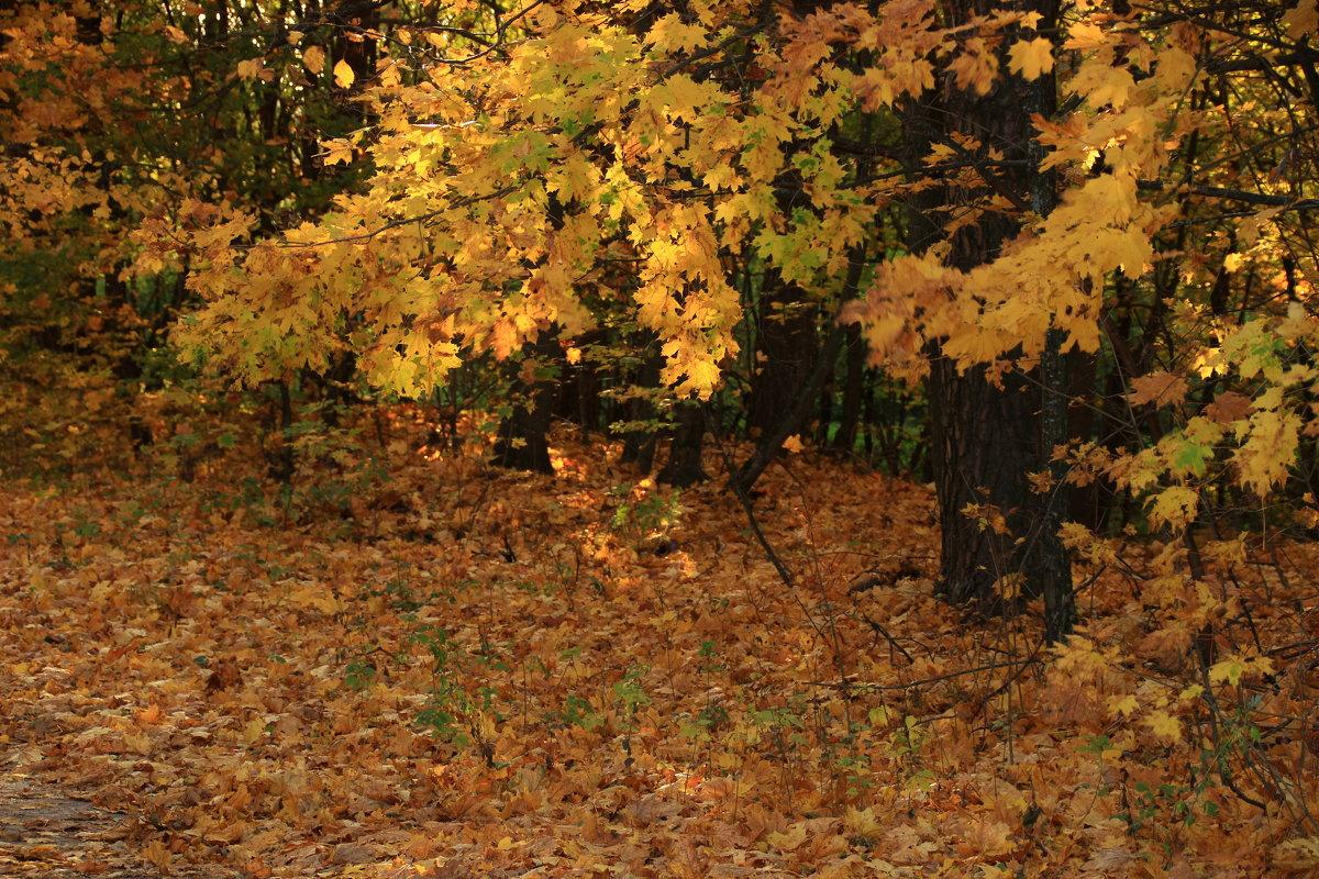 осень - оксана