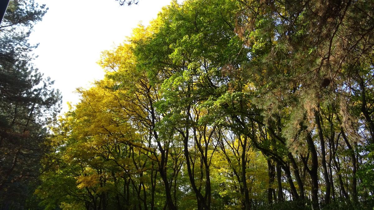 Осень - татьяна