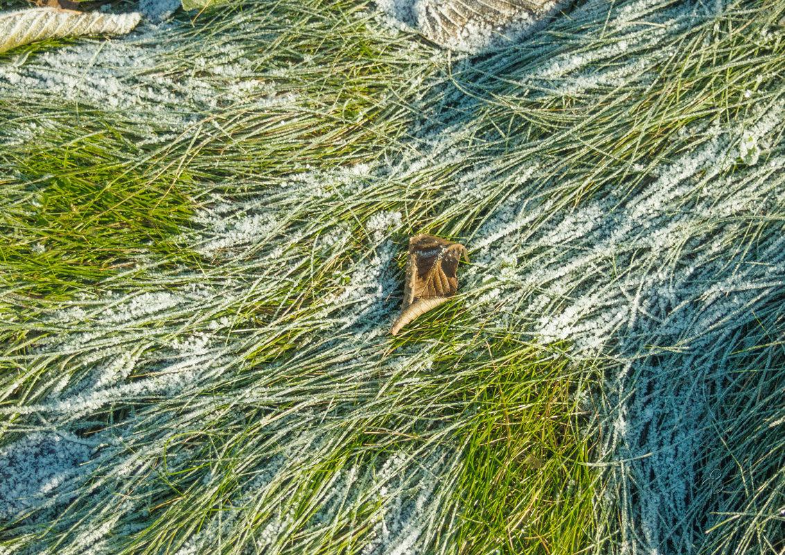 Унесённые ветром - Виталий