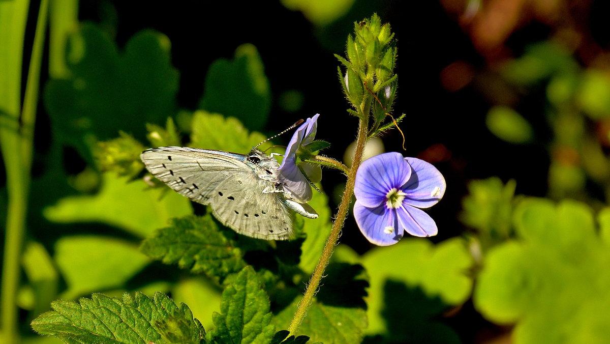 голубые цветки - Александр Прокудин