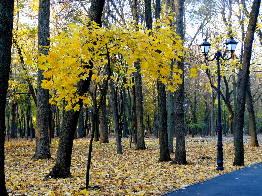 Ноябрь в парке... - Тамара (st.tamara)