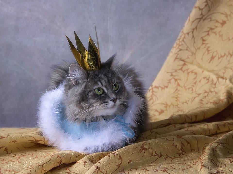 Принцесса - Ирина Приходько
