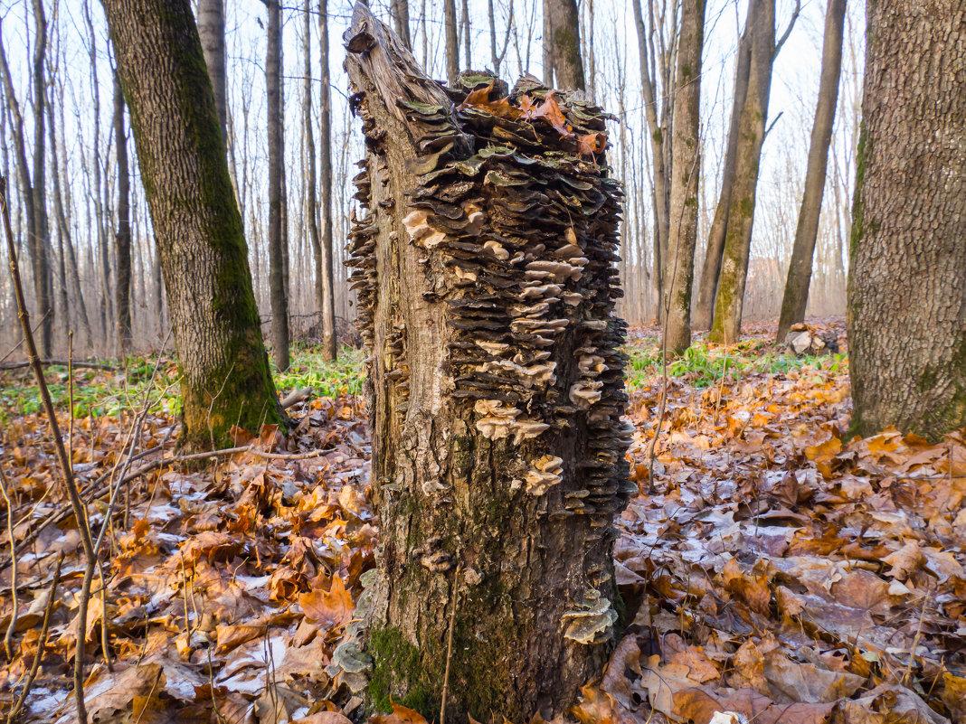 грибной дом - Денис Антонов