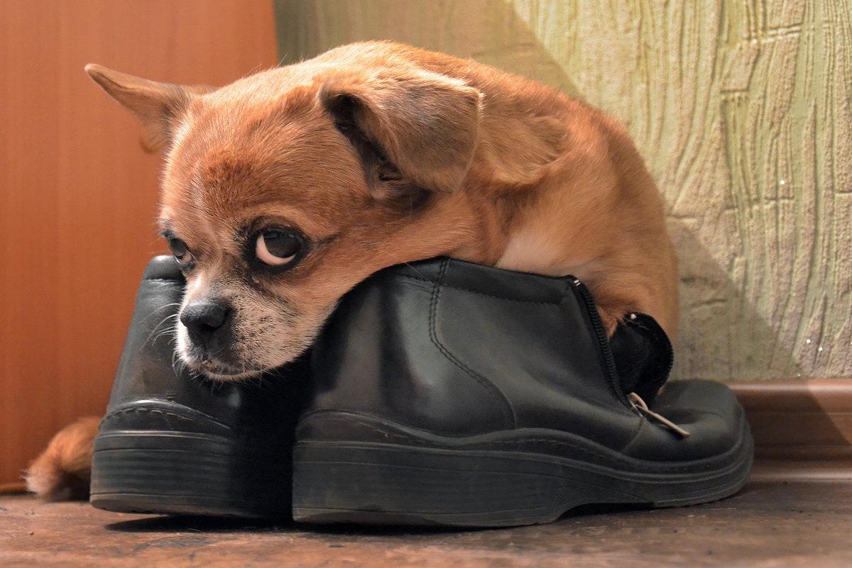 В ботинках - Владимир Анакин