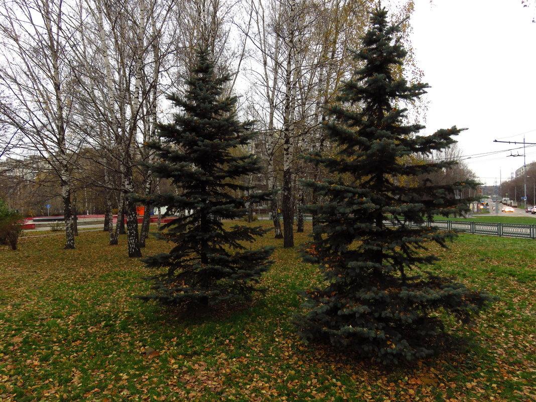 Глубокая осень почти не цветная - Андрей Лукьянов