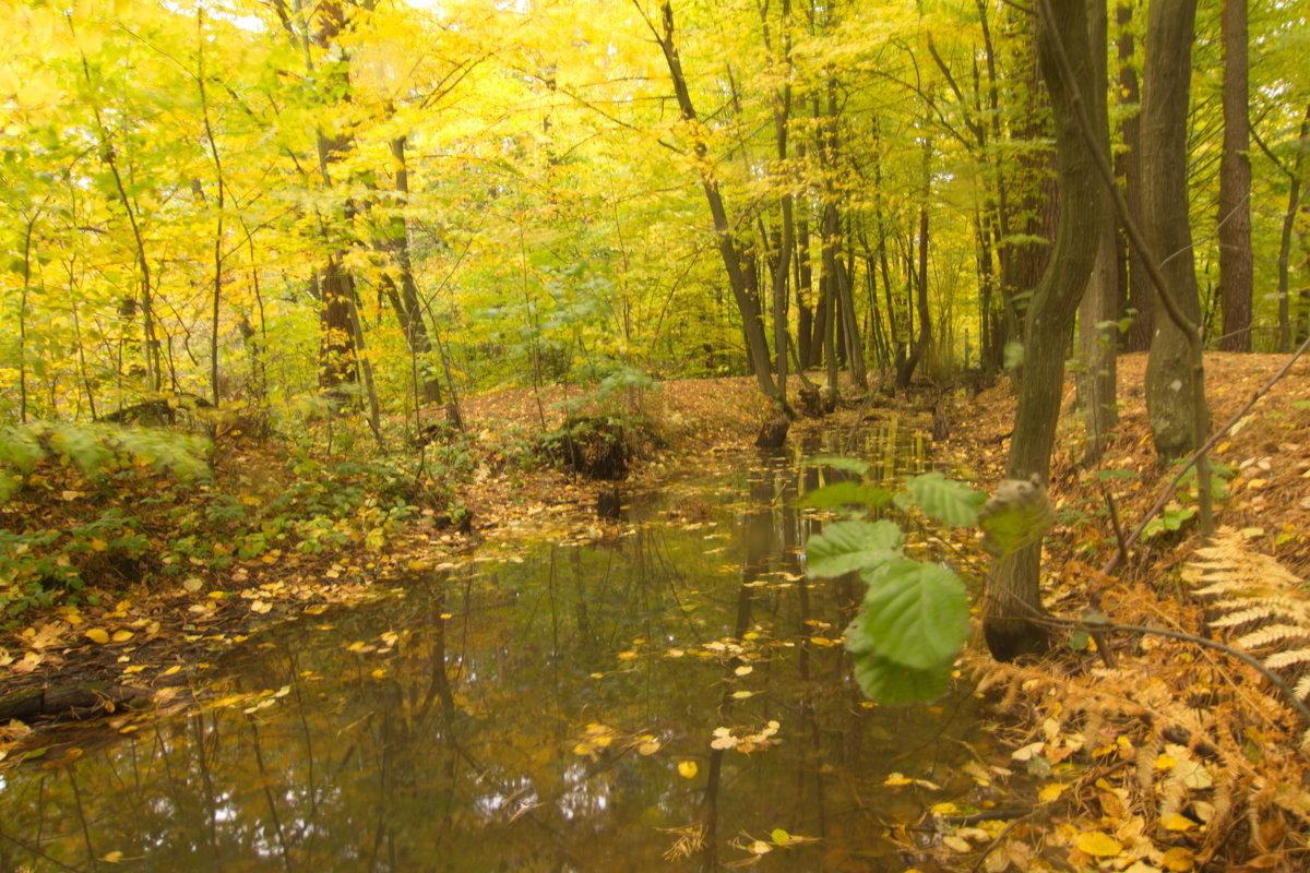 лесной ручей - Владимир Зырянов