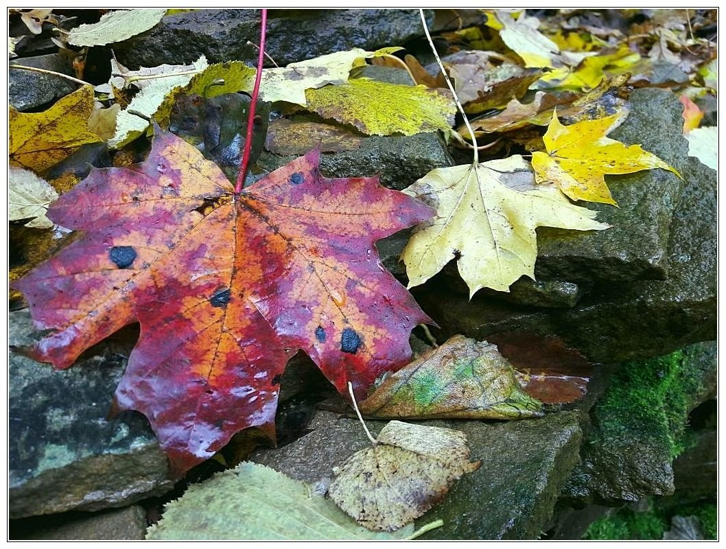 Осень. - kvstu