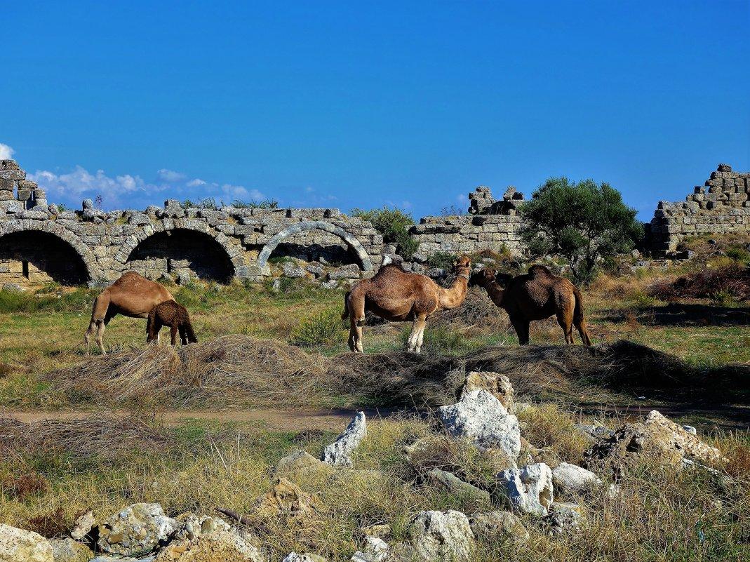 Среди античных руин... - Sergey Gordoff