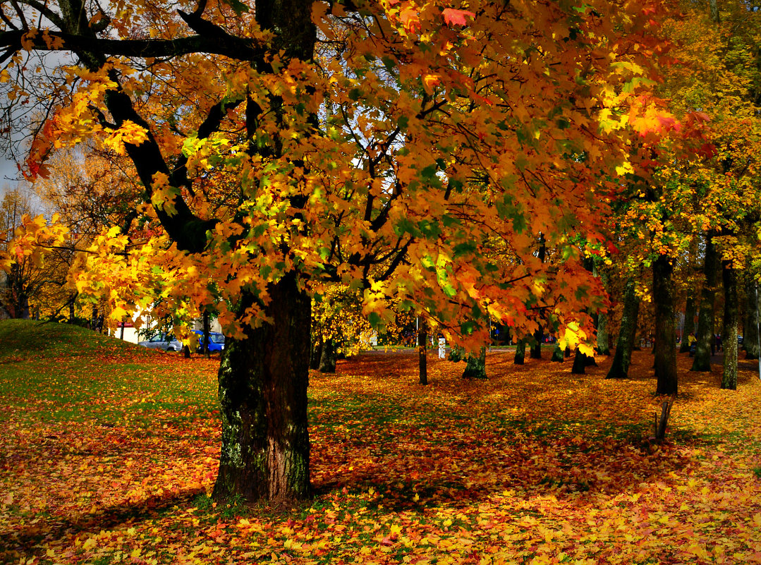 золотая осень - Lanna