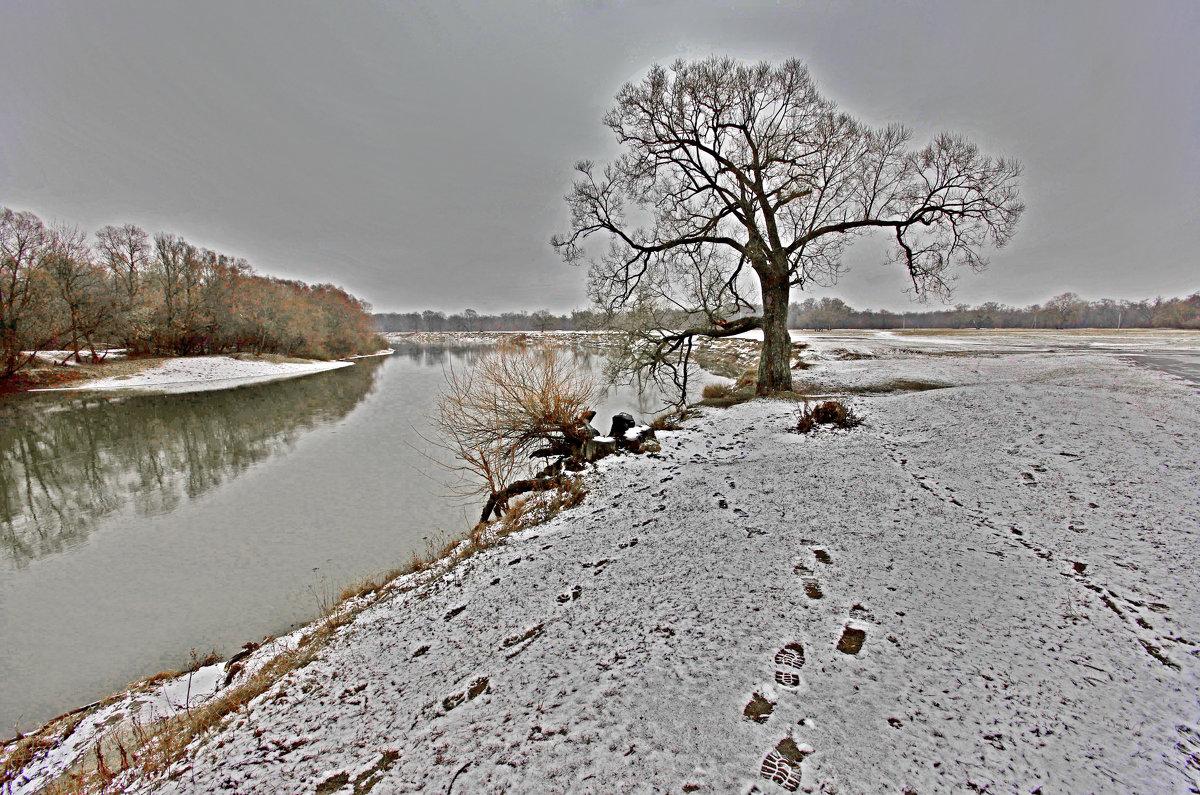 Дерево в непогоду на Лугу - Дубовцев Евгений