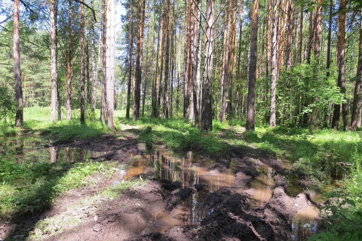 Дорога в лесу - Вера Щукина