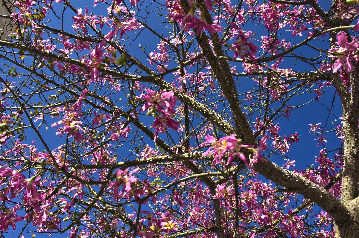Бутылочное дерево - Ефим Журбин