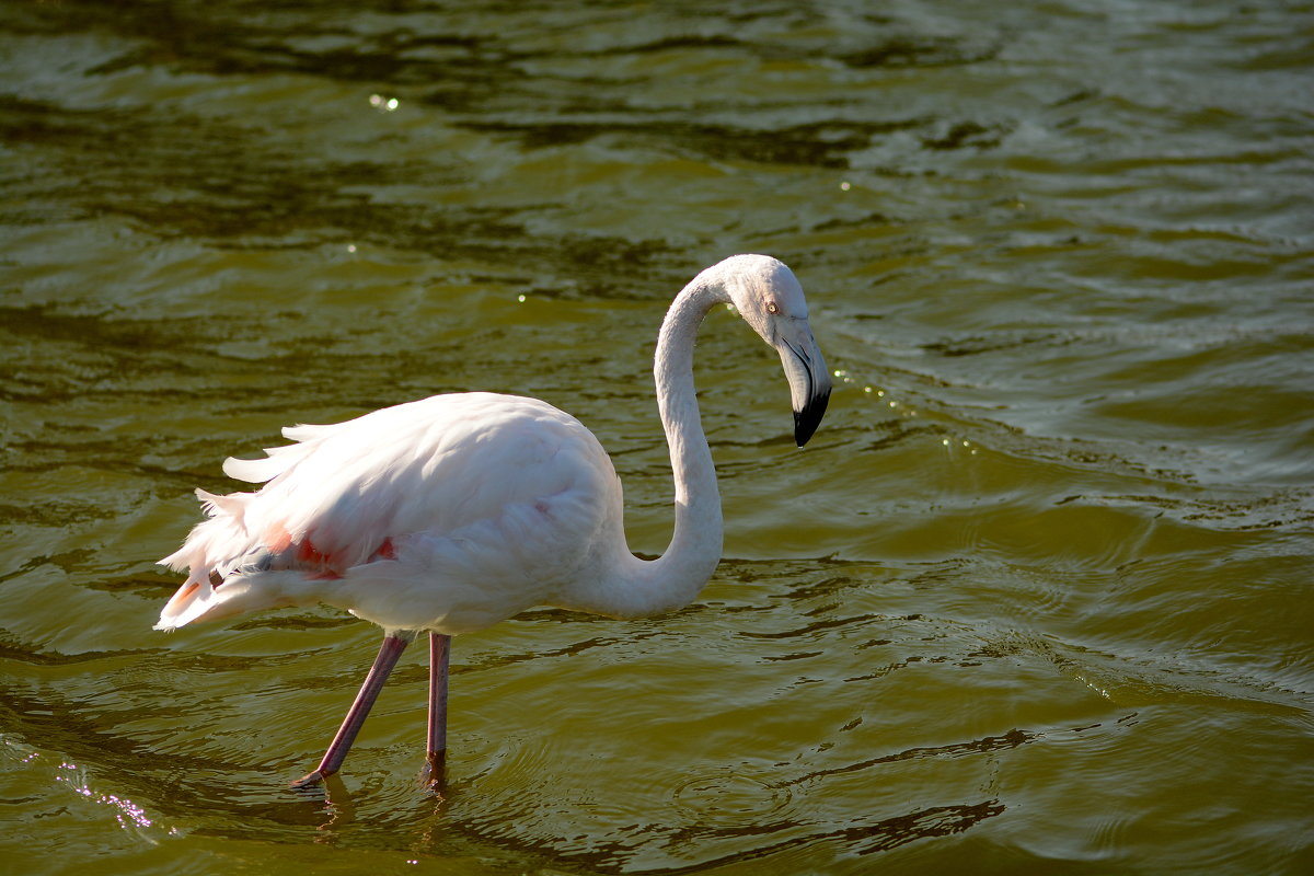 Фламинго - Олег Шендерюк