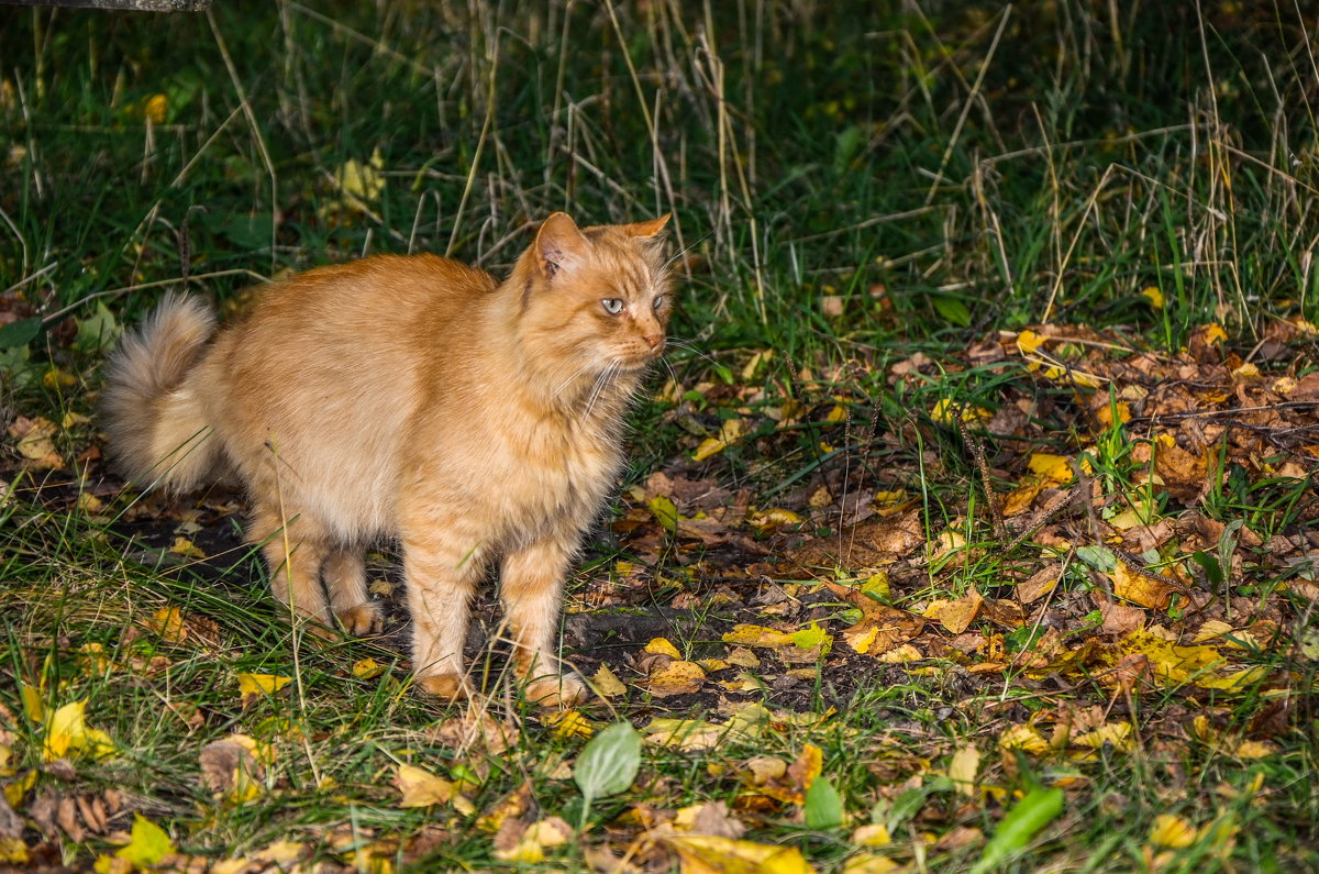 Просто кот - Ирина Никифорова