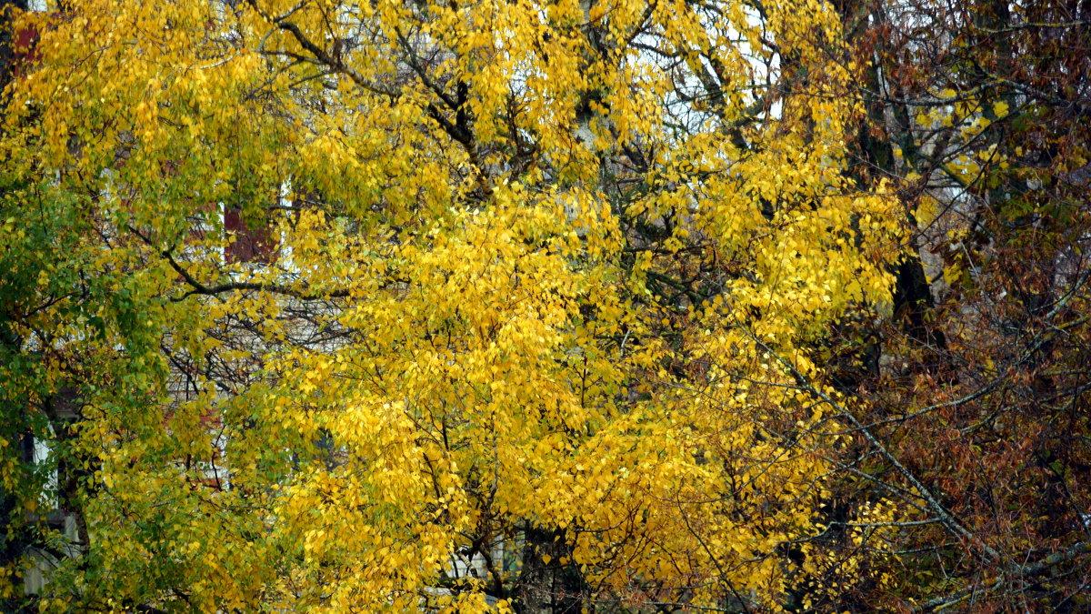 Осень стучится в окна - Михаил Новиков