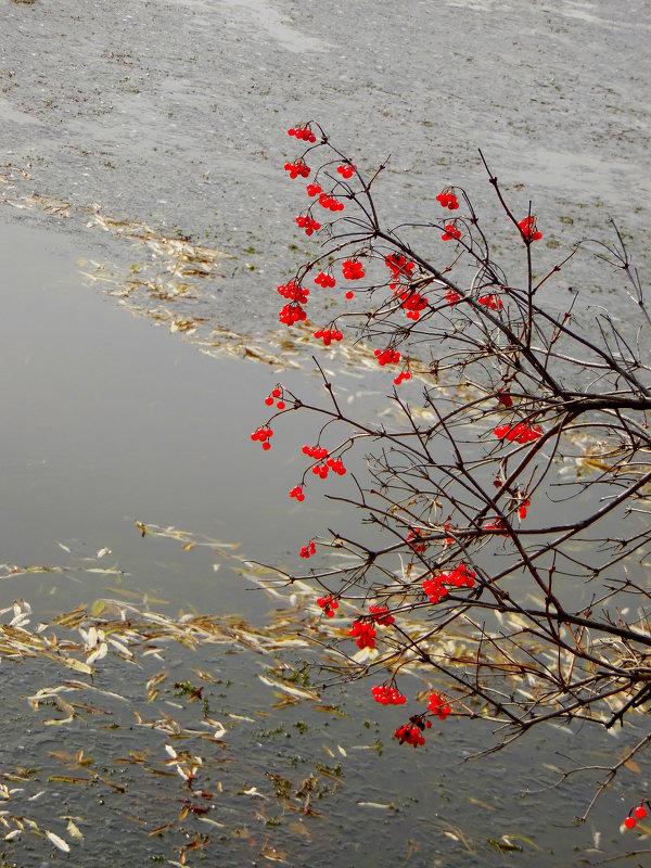На осенней реке. - nadyasilyuk Вознюк