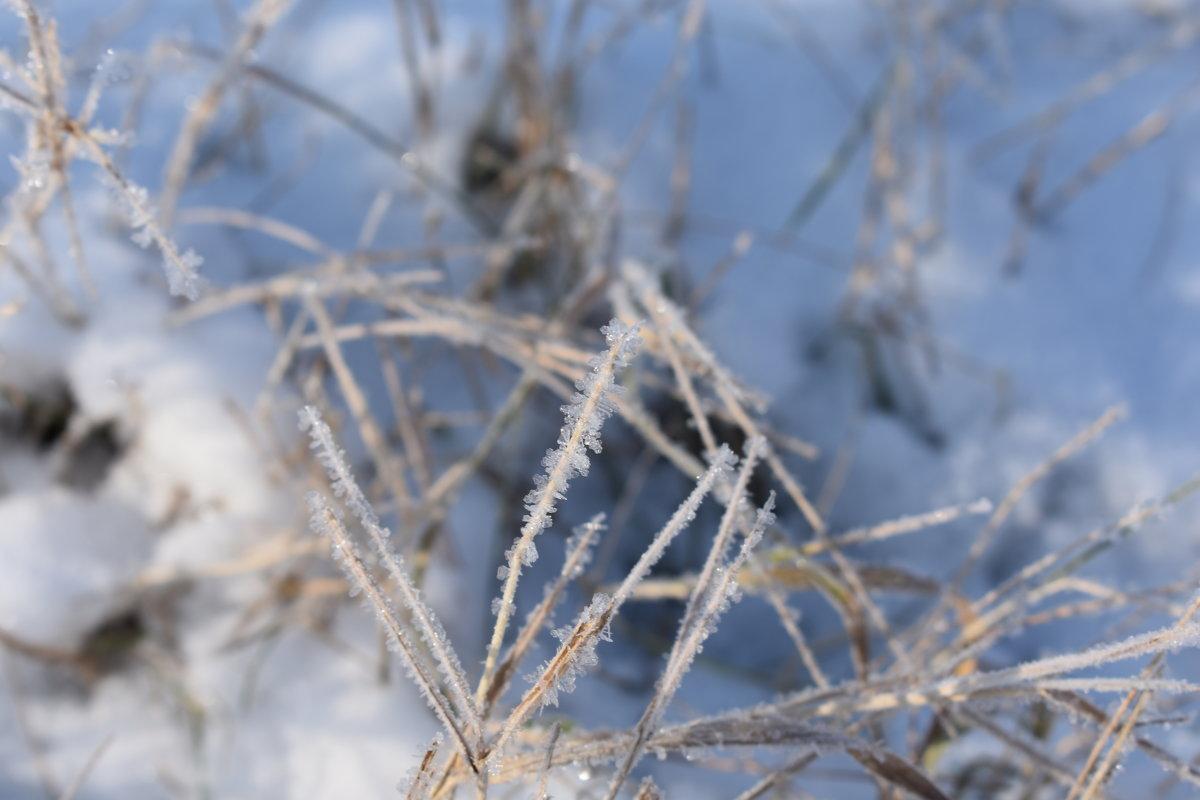 первый снег - Елена М