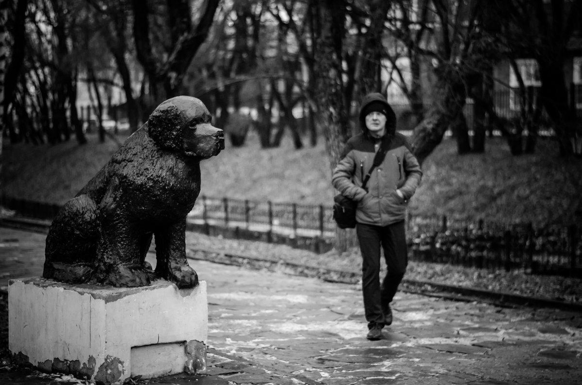 Собака - друг человека - Lena Veter