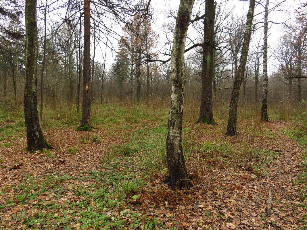 Лес обнажился - Андрей Лукьянов
