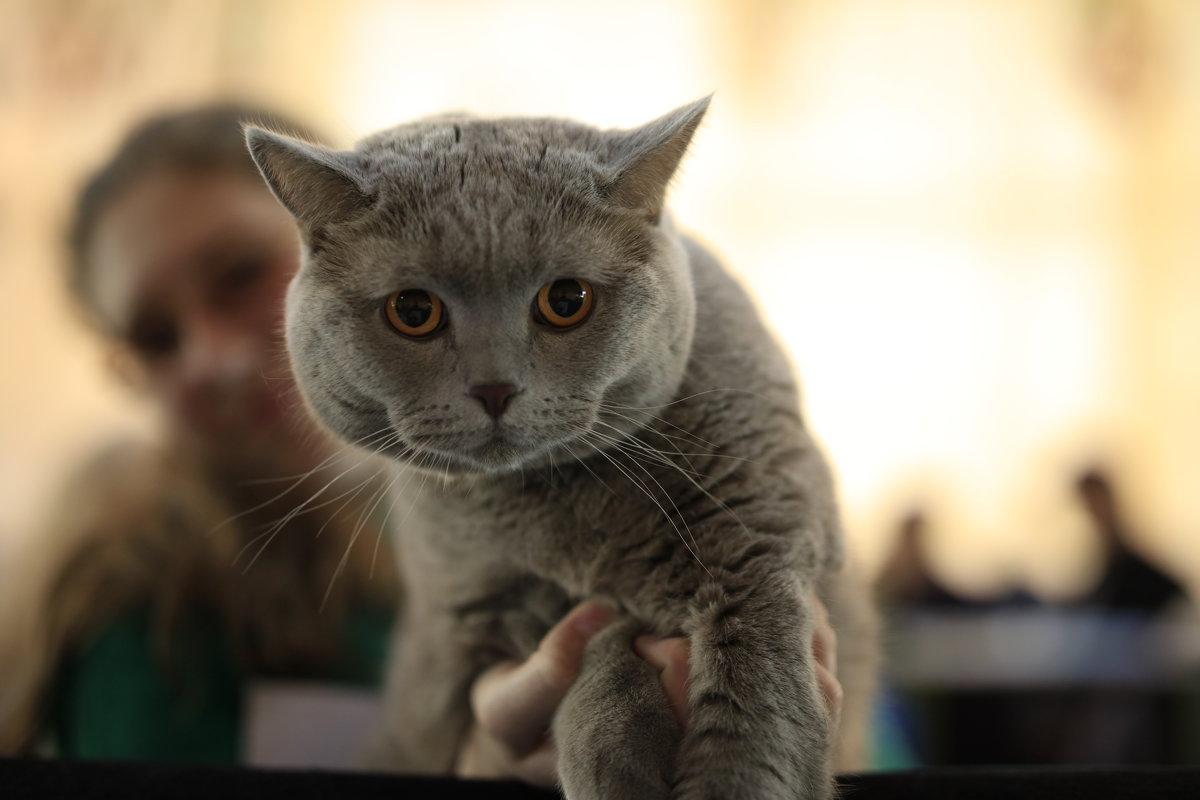 Астана .Выставка кошек - Sergey Prussakov