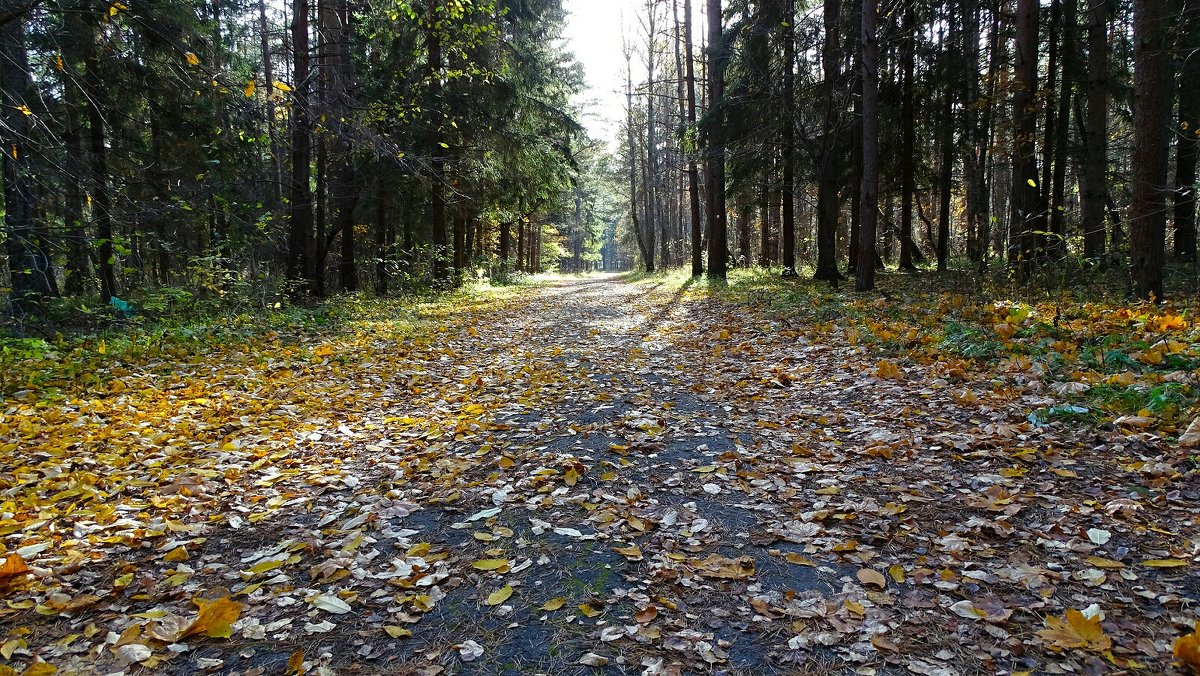 Листья жёлтые под ноги нам ложатся - Милешкин Владимир Алексеевич