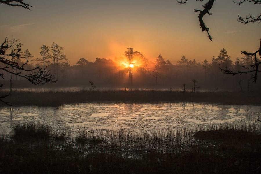 И на болотах бывает красиво... - Anna Klaos