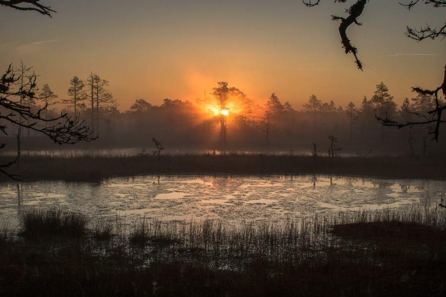 И на болотах бывает красиво... - Anna Leshtshenko