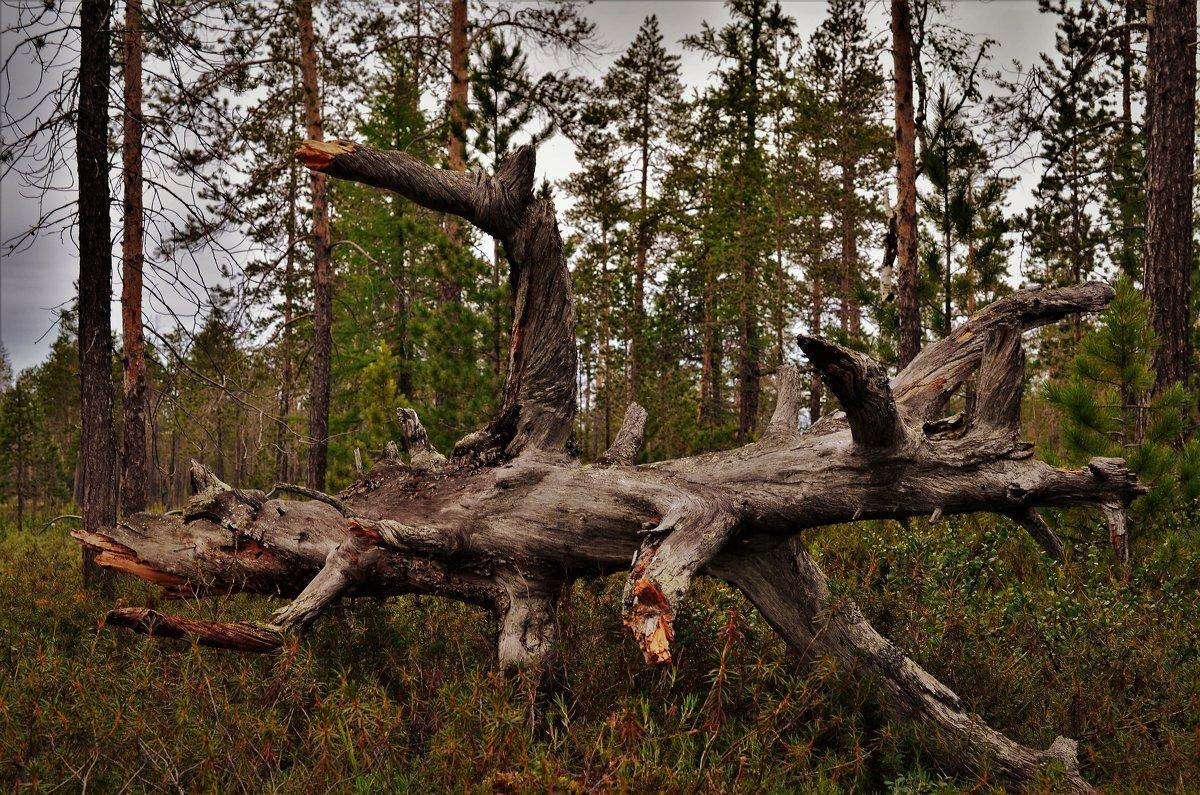 Лесной монстр. - Лариса Красноперова