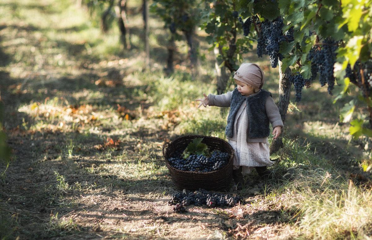 Сбор урожая в Грузии - Александра Капылова