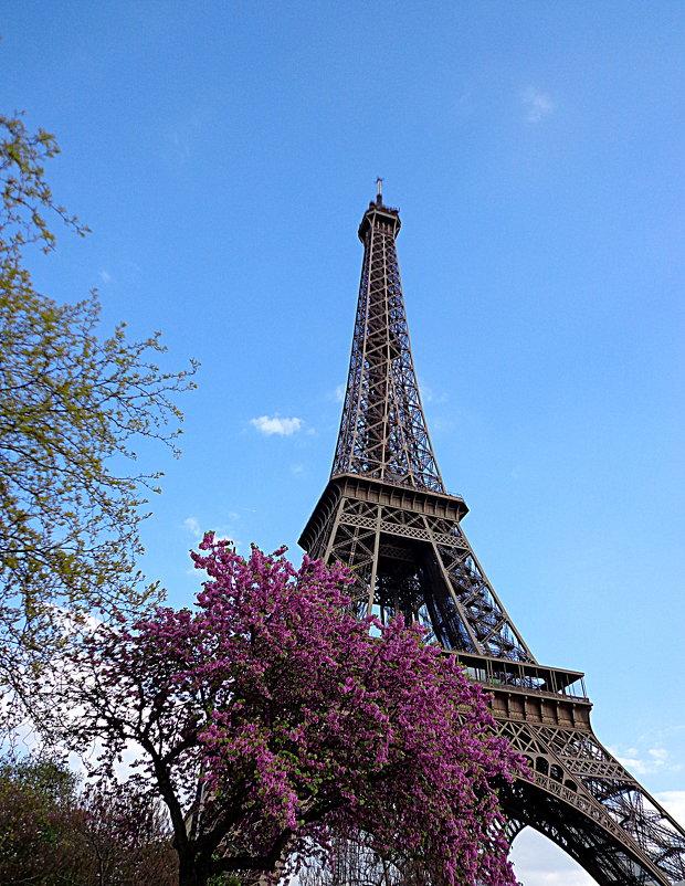 Весна в Париже - svetlana.voskresenskaia