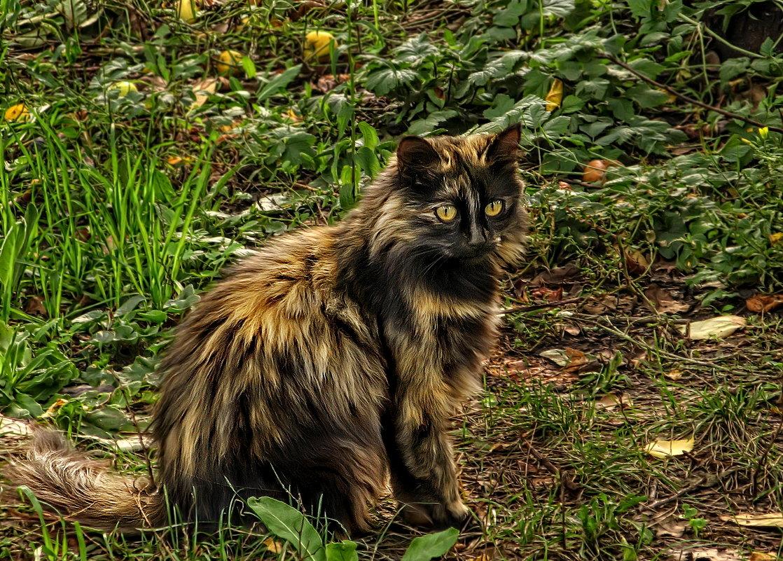 осенний кот - Irina