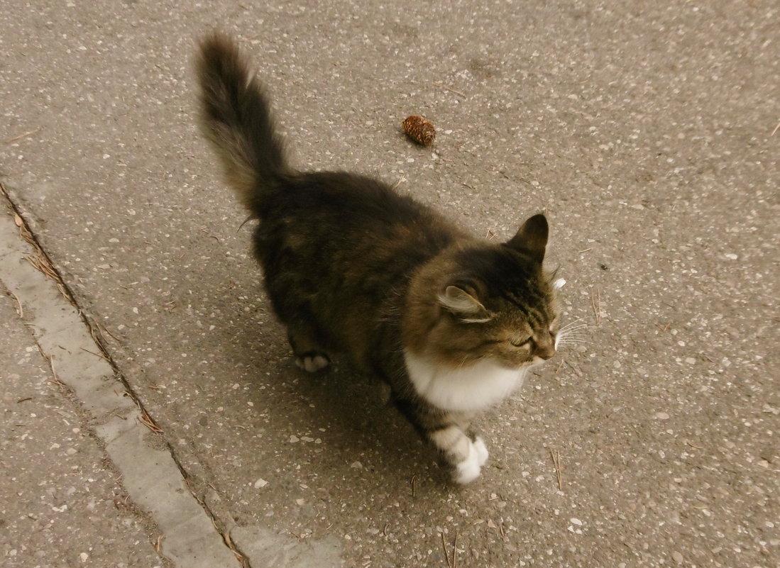 Кошка, которая гуляет сама по себе - татьяна
