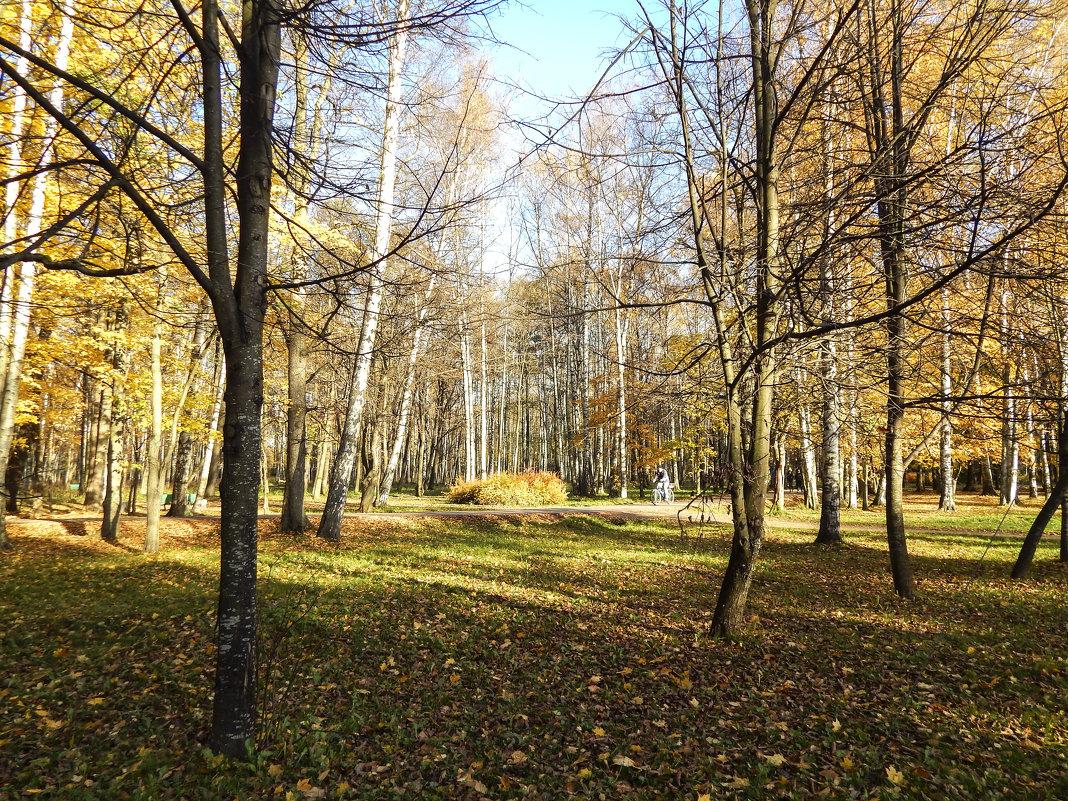 Санкт-Петербург. Провожая золотую осень. - Лариса (Phinikia) Двойникова