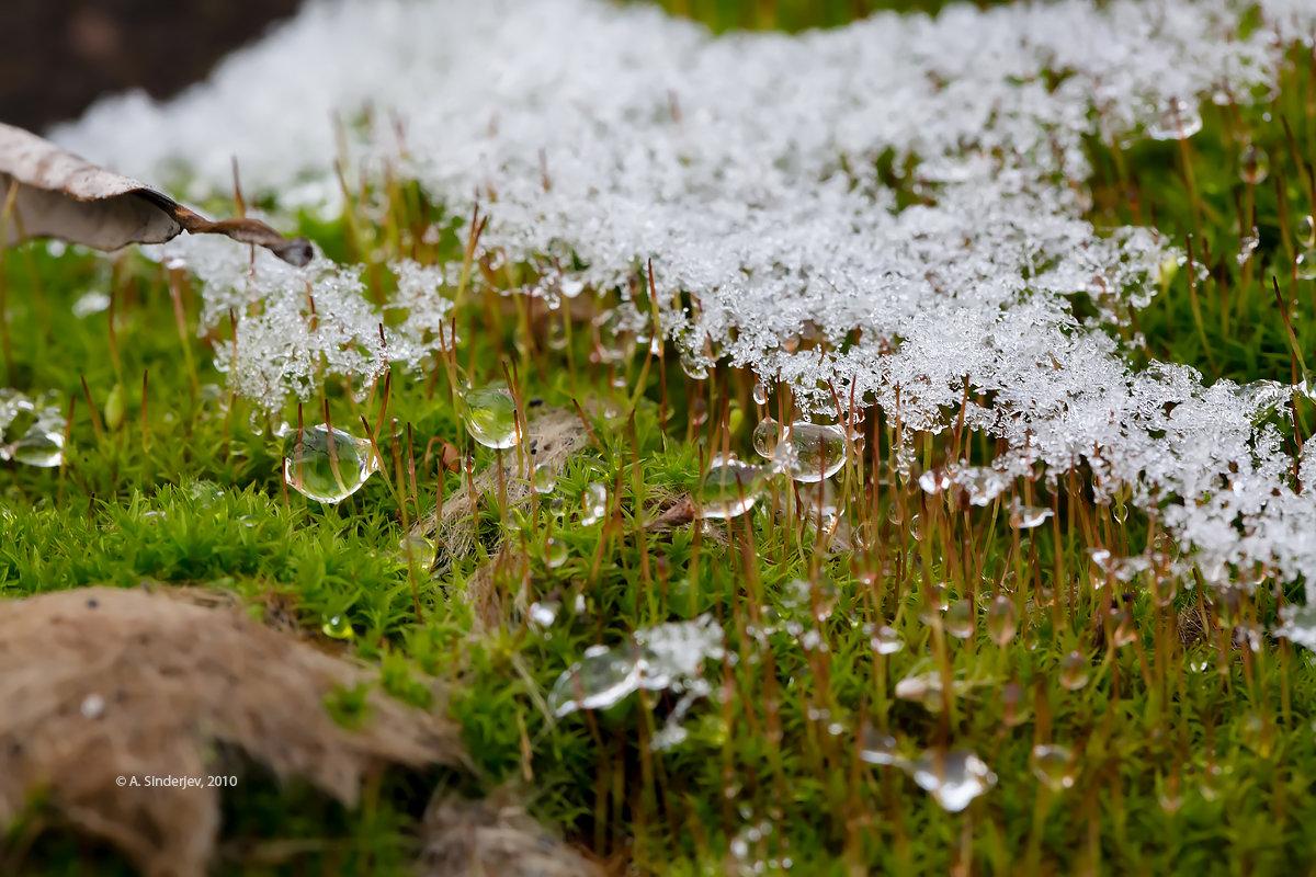 Макро мха и капель талого снега - Александр Синдерёв