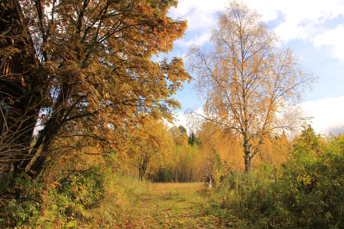 Осень..Грустное время... - Александр Широнин