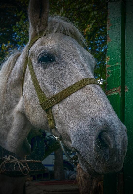 Грустная лошадка - Игорь Кузьмин