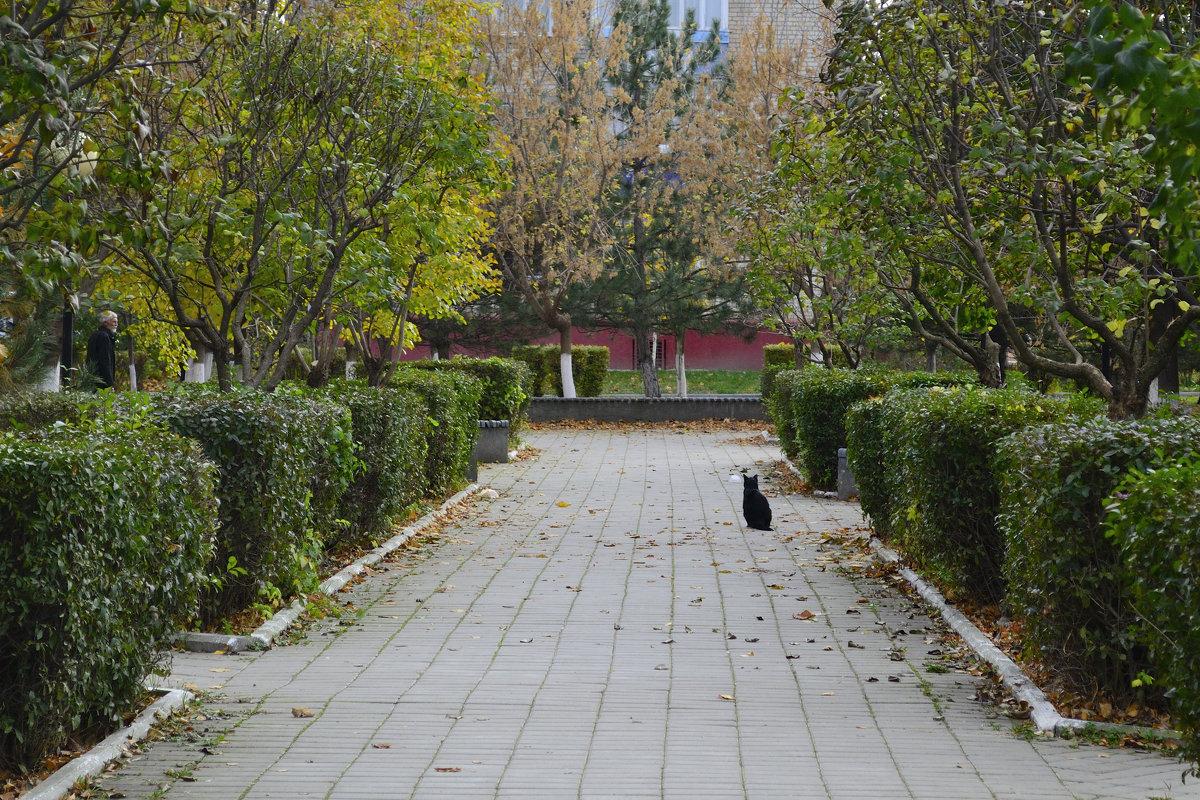 Одинокий котэ (( - Анастасия Фомина