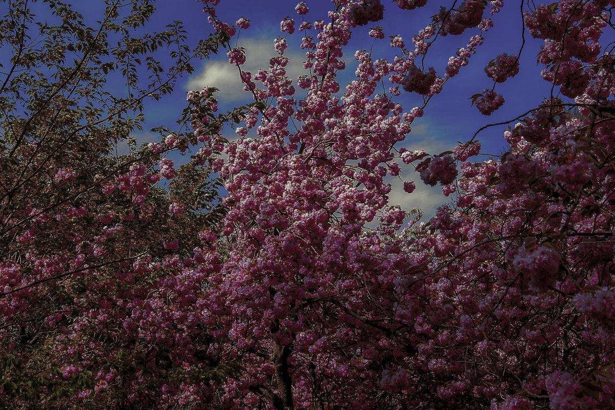 Разные цветы глядят на нас - Александр Липовецкий