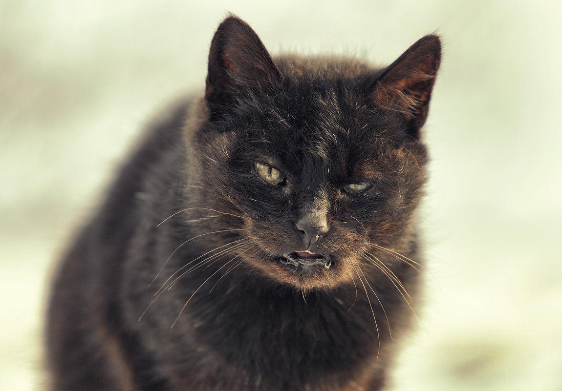 Cat - Денис