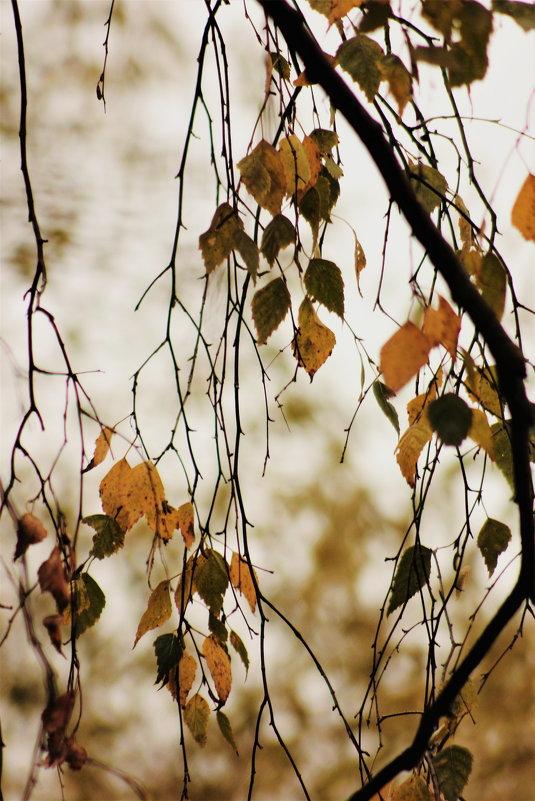 Осень - Софья Богаткина