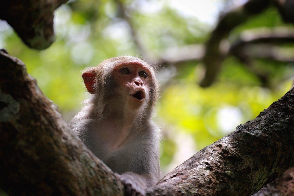 Китай. На острове обезьян - Владимир Шадрин