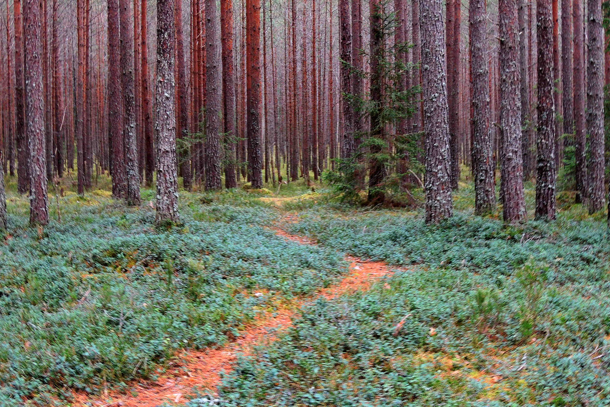 Прогулки в осеннем лесу.Ноябрь - Павлова Татьяна Павлова