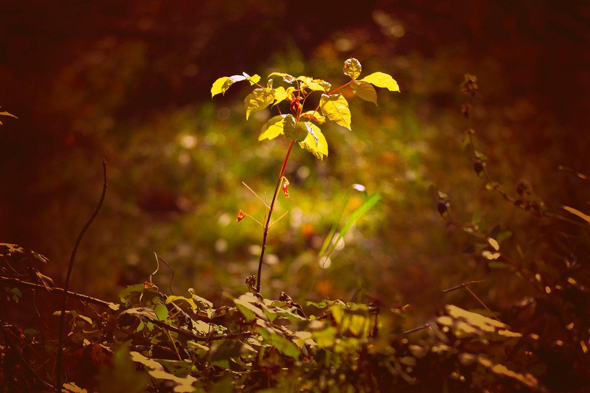 Деревце - Nina Streapan