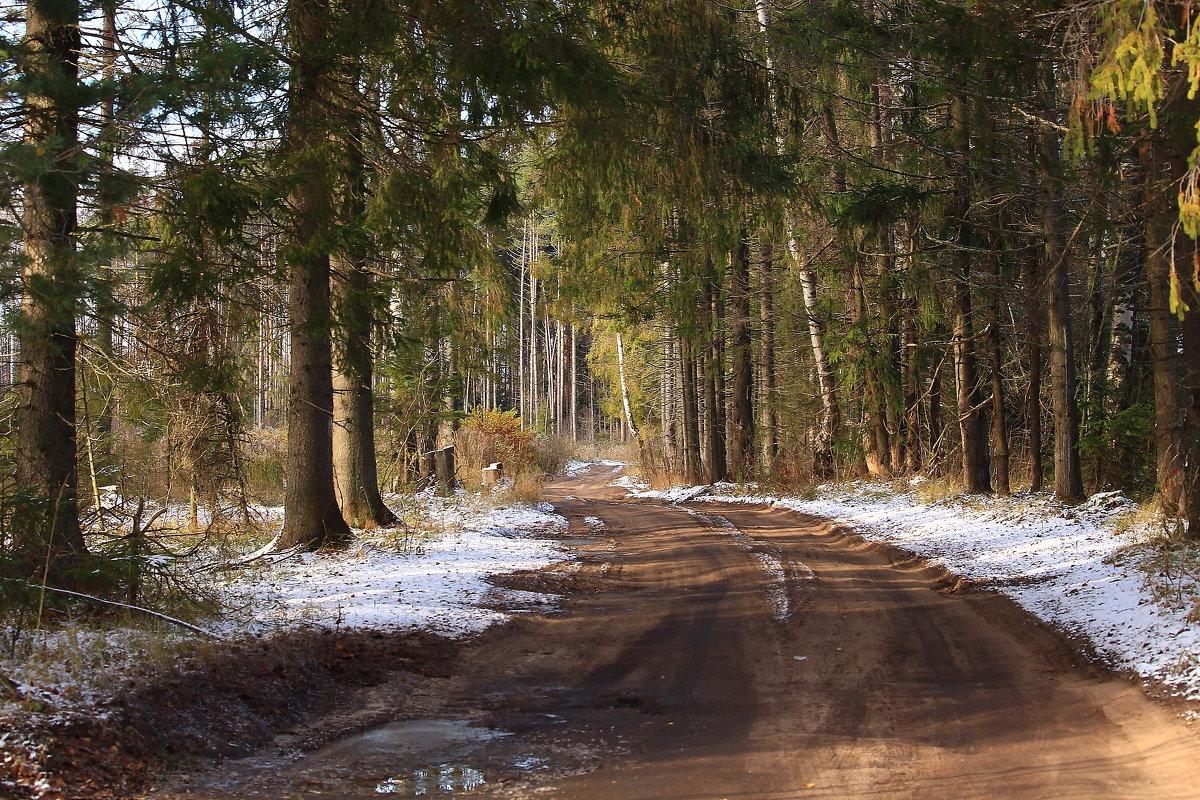 По лесной дороге - Татьяна Ломтева