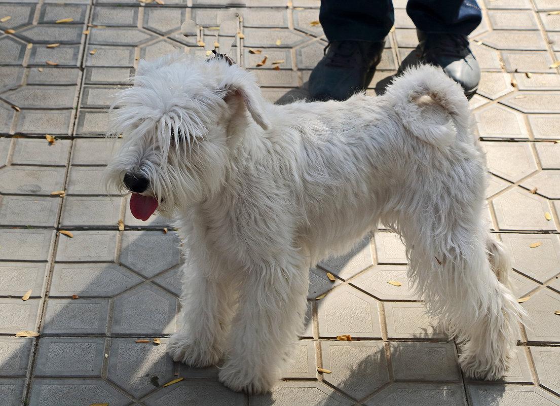 На выставке собак - Светлана