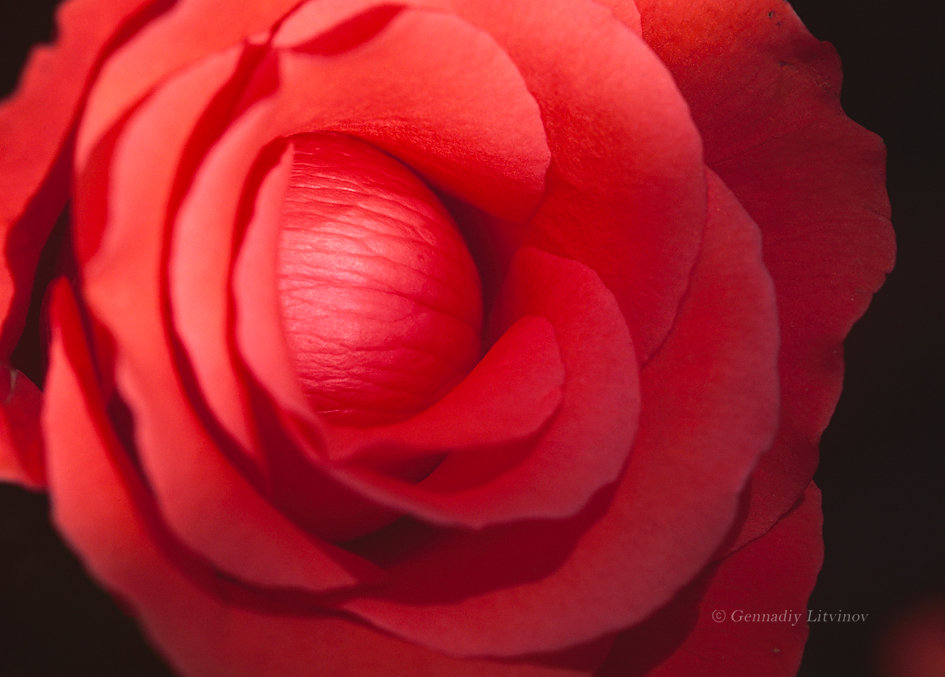 О чём молчат цветы - Gennadiy Litvinov