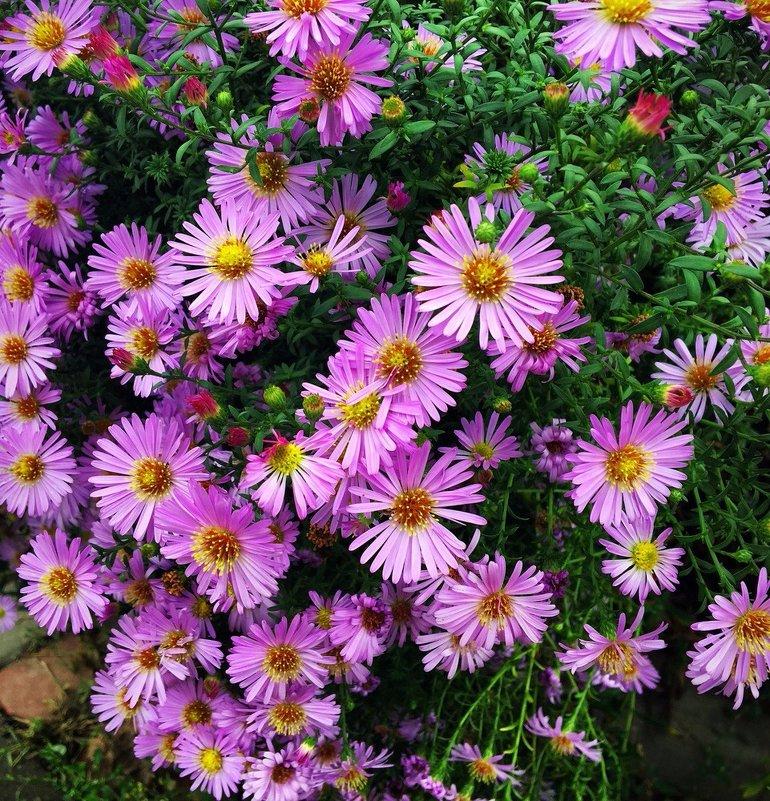 Осенние цветы - Алла ZALLA